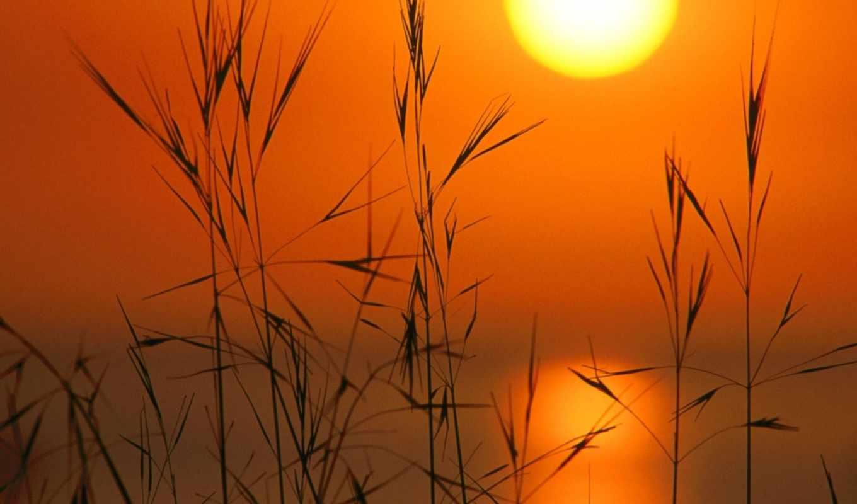sun, закат, небо, закате, любой, бесплатные, колосья, вкус, untoniq, только, качественные,