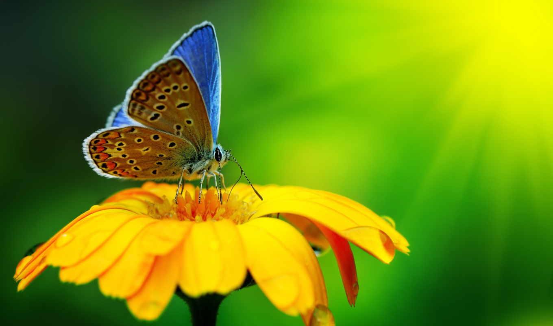 бабочка, цветы, красиво, yellow, природа, drops, девушка, макро, water,