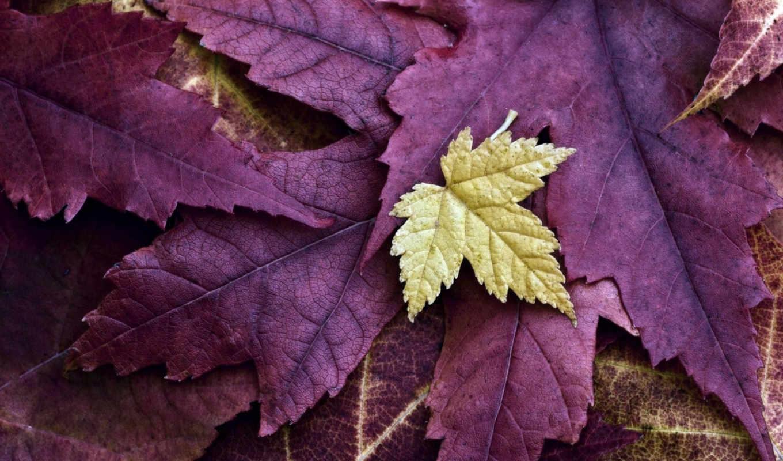 природа, листья, желтый, bild,