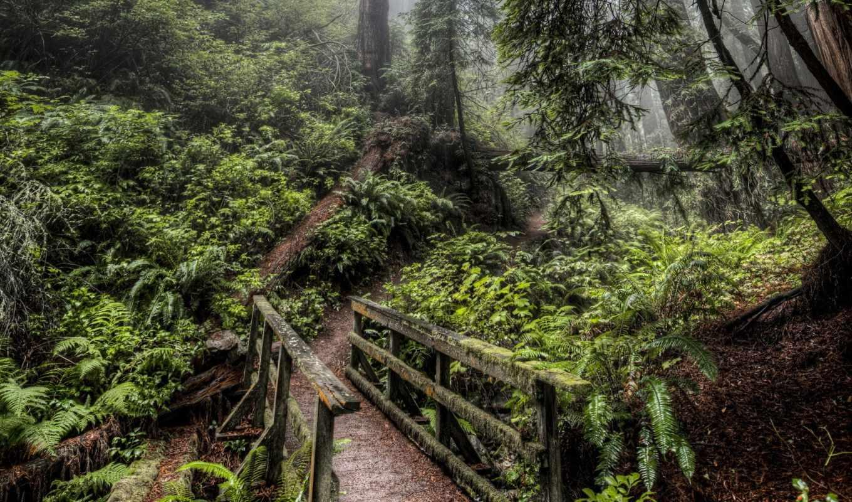 природа, дорога, мост, лес, картинка,