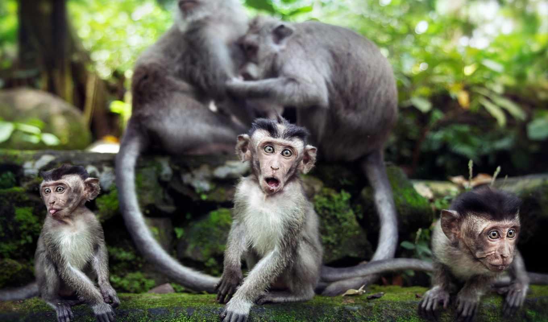 обезьяны, природа, животные,