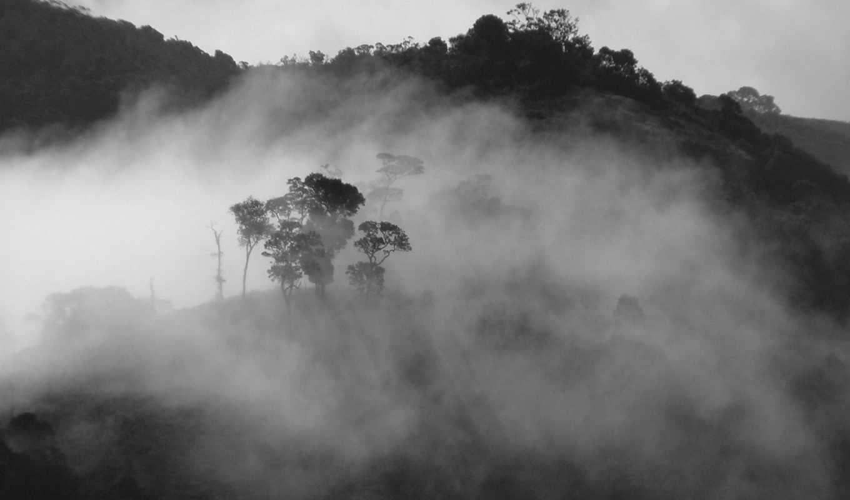 туман, лес, белый, чёрно, savers, screen, treemist, nature, сборник, красивых, full, широкоформатных, картинка,