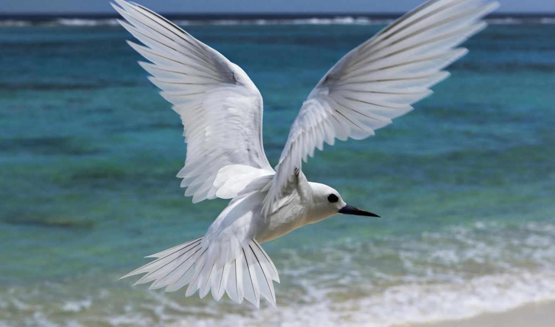 white, bird, flying, birds,