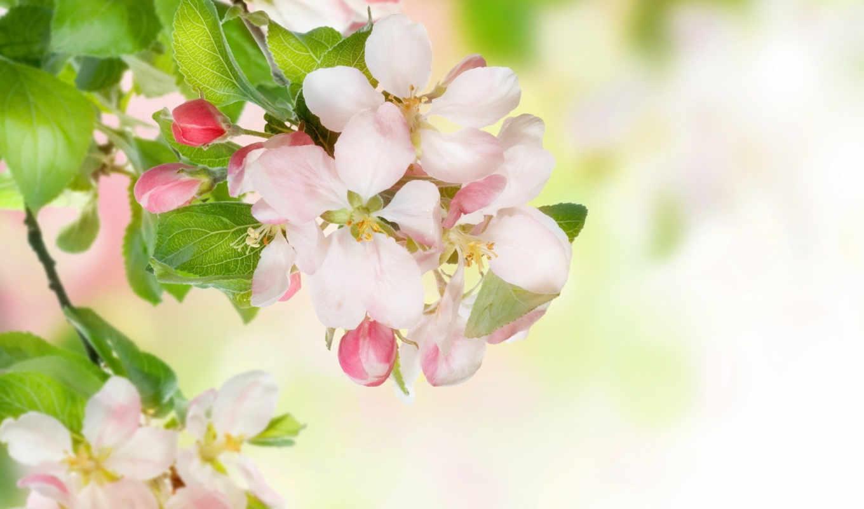 кукла, ветка, марта, цвет, вишни, цветы, поздравление, картинку, выберите, картинка, кнопкой, часть, розовых, бело, веточка, тэги, правой, чтобы,