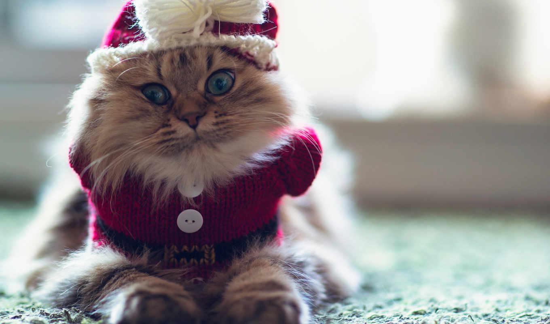 torode, кошка, benjamin, взгляд, настроение, две, бен,