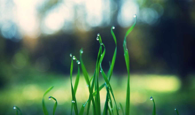 grass, nature, green, trees, outdoors, нояб,