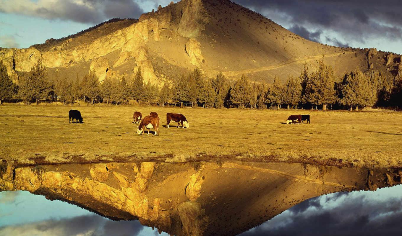 воде, отражение, красивых, коровы, подборка, девушек, красивые, людей, красивое,