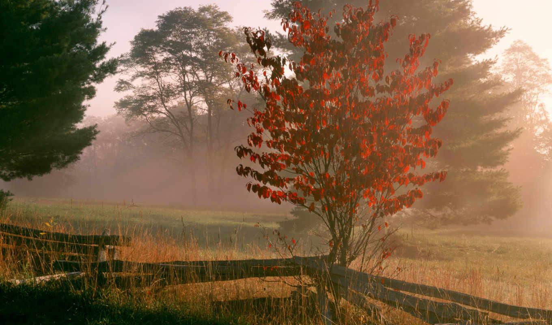 samsung, туман, дек, desktop, деревья, природа, images,