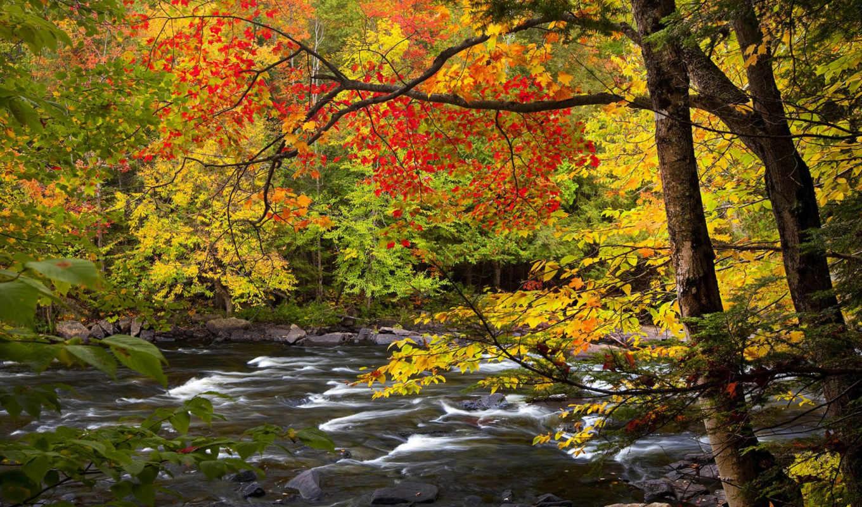 онтарио, осень, река, park, oxtongue, algonquin, priroda, osen, reka,