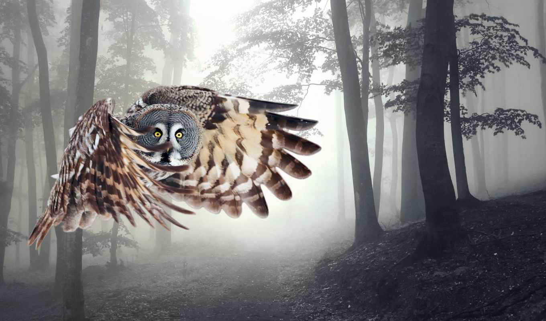 сова, полет, крылья, совы, вышивки, ночь, птица,