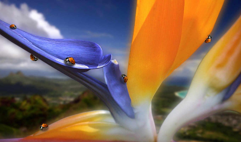 цветы, free, photos, макро, stock, images, заставки, красивые, vectors, широкоформатные,