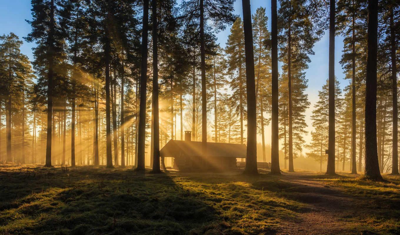 лес, изьба, лесу, house, природа, утро, sun, lodge, trees, pine,