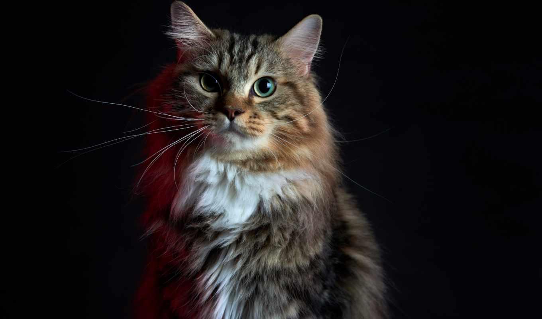 ,sitting, cat,