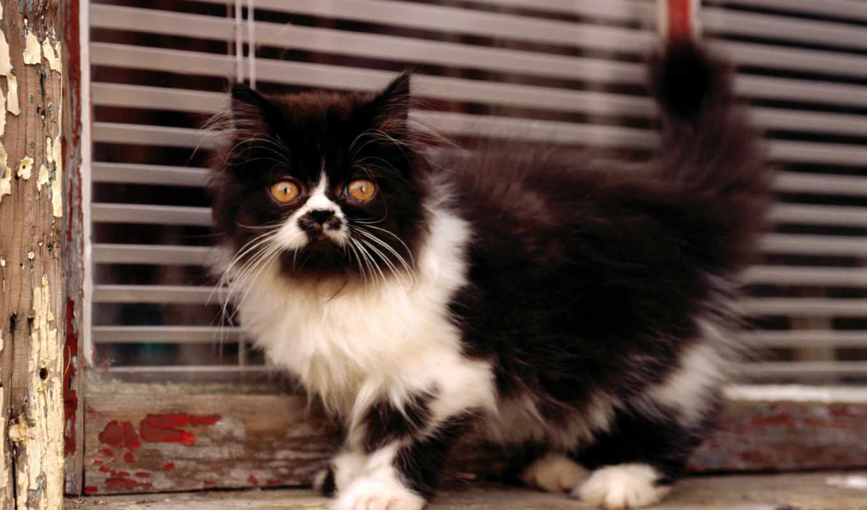 cat, белый, черный, котенок, картинку, картинка, кнопкой, мыши, так, левой, салатовую, кномку, кликните, же, понравившимися, поделиться, картинками,