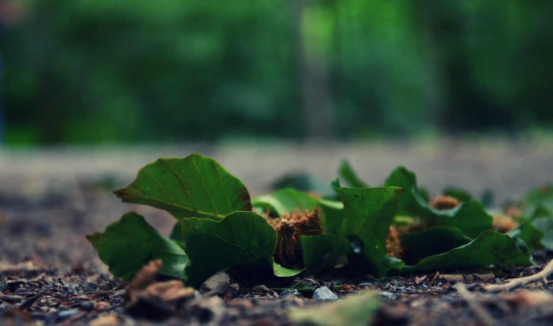 асфальт, зелёный, жук, макро, лежат,
