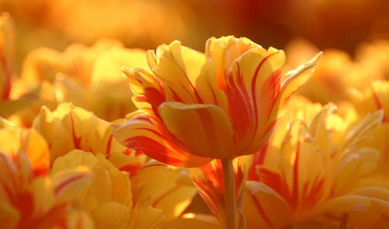 лето, природа, цветы, темы, картинка,