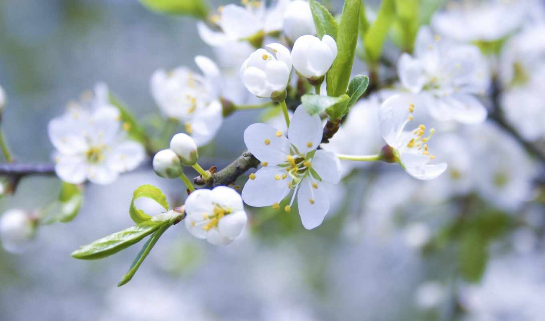 ,весна,цветочки,веточка,