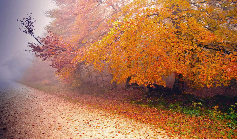 осень, туман, дорога, природа, дерево,