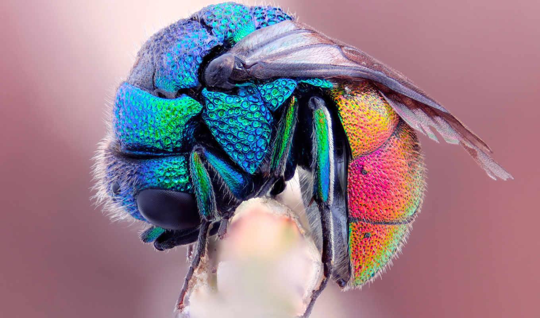 насекомые, fly, макро, насекомое, животные, full, глаза, бабочка,