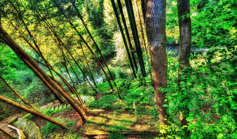река, florestas, лес, encontrar, natureza, small, tags, estas,