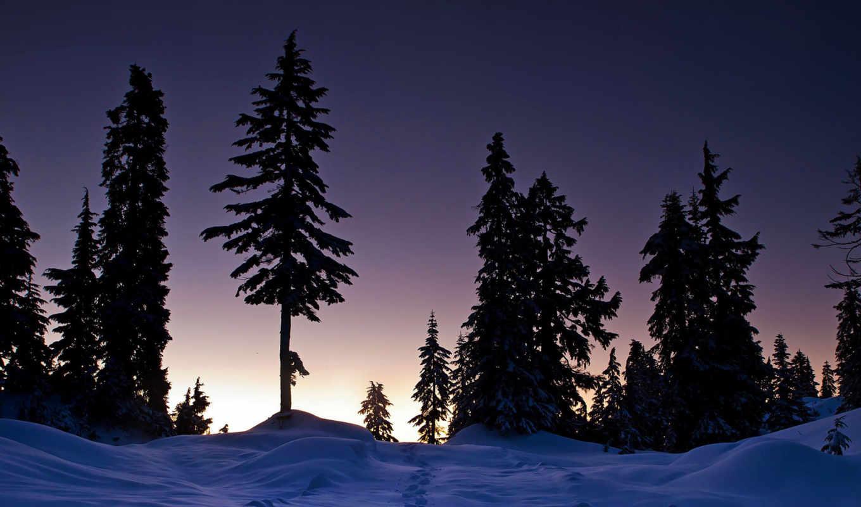деревья, закат, следы, снег, зима, телефон, природа, категории, пейзаж, нояб, тематика, картинкой, страница, песочница, можно, установить,
