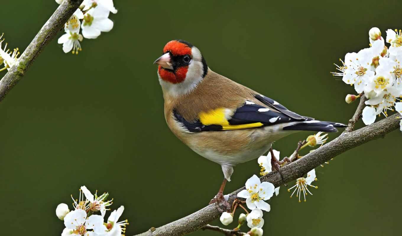 птица, инструкция, красивый, png, online, состав, vlcsnap, зонтик, против, описание, primenenie