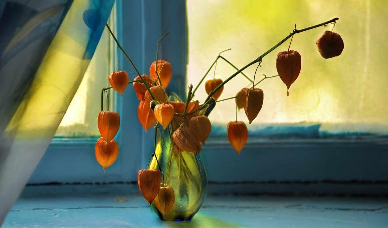 окно, ваза, цветок