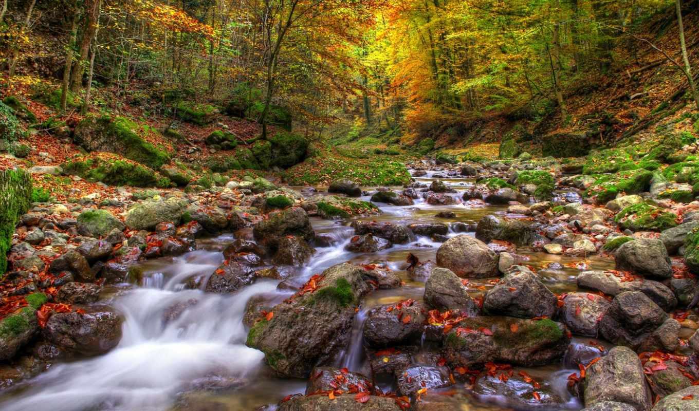осень, камни, вода, деревья, листья, природа, река, лес,