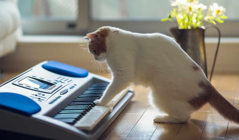 torode, бен, benjamin, кошка, кот, hannah, house,