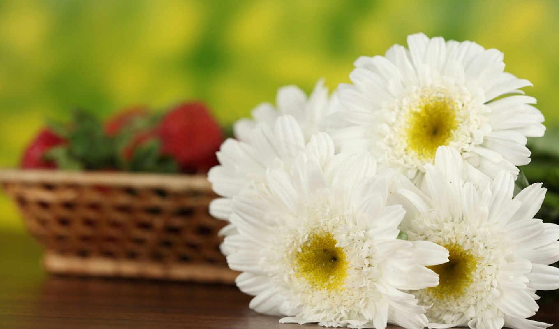 cvety, ромашки, февр, дек, корзинка, букет,
