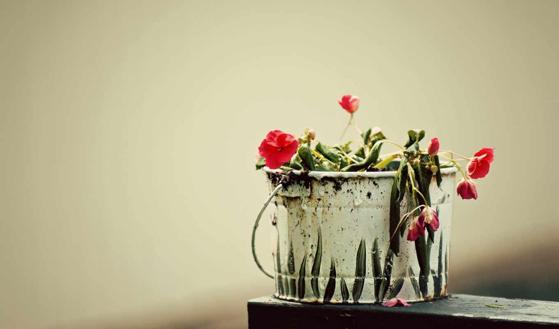 cvety, makro, увядшие, краски, под, ведре,