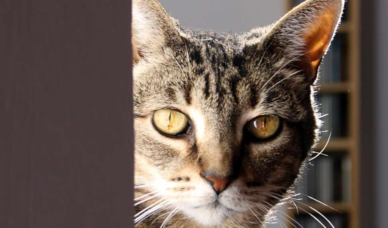 кот, тема, окно, cute, animal, karoum