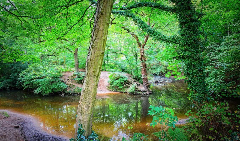 природа, сайте, деревья, качественные, пейзажи -, загрузок, самые,