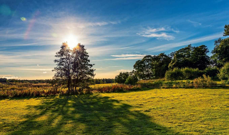 природа, деревья, небо, поле, луг,