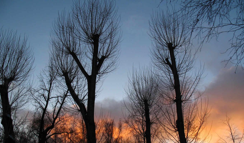 природа, you, категория, совершенно, закат, деревья, небо,