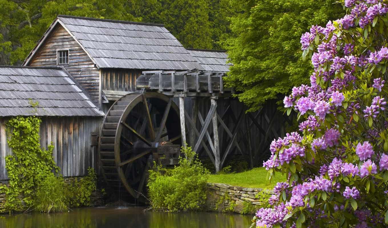 водяная, mill, природа, река, bush, рододендроны,