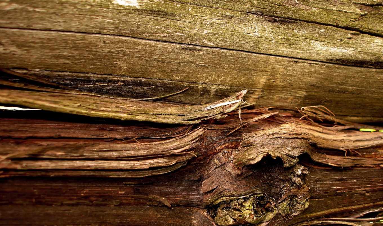 wood, текстура, материал, дерево, сук, текстуры, макро, волокна,