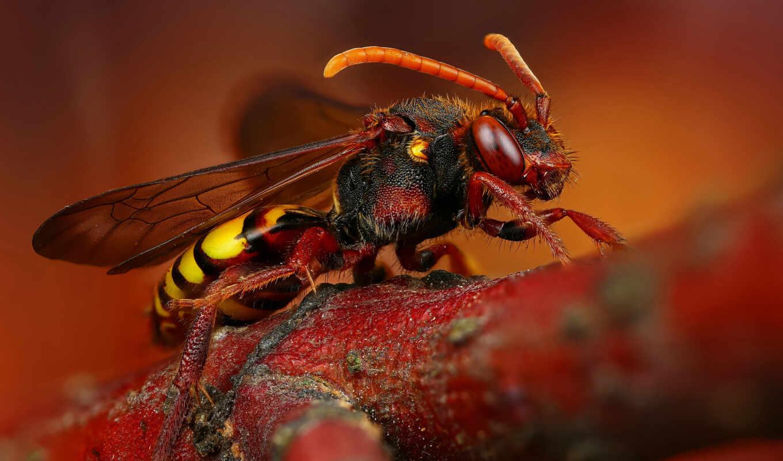 makryi, animal, hornet, пчелка, насекомое, дерево, бакенбарды, крыло