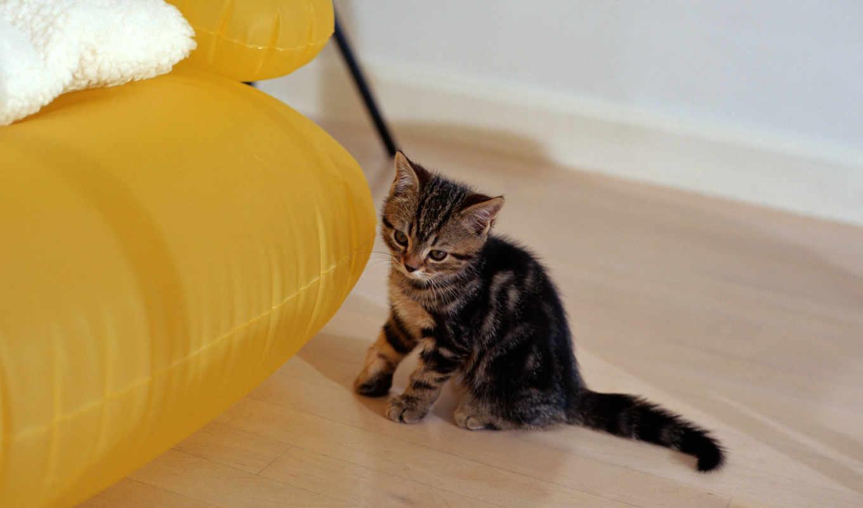 обои, животные, кошки, котёнок, котята, marine, см