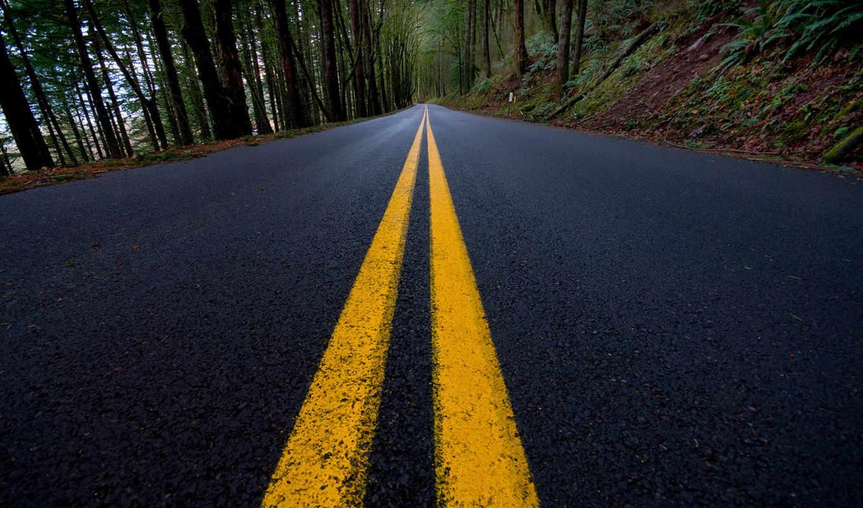 разметка, лес, дорога, линий, roads, desktop,