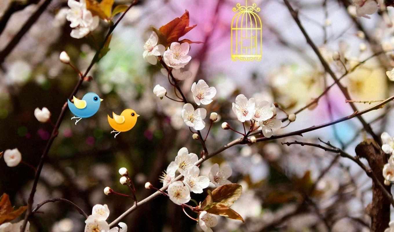 весна, девушки, долгожданная, настроение, природа, красивые, широкоформатные,