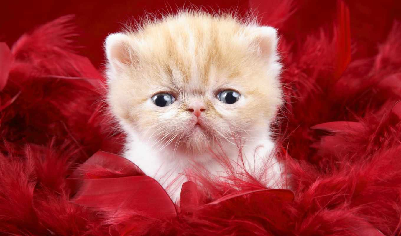 котенок, маленький, котята, уставший,