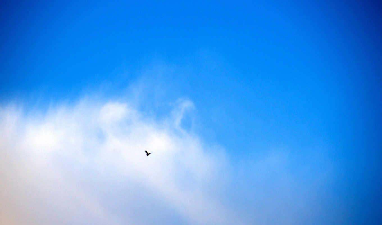 ,облака,птица,голубой,небо,