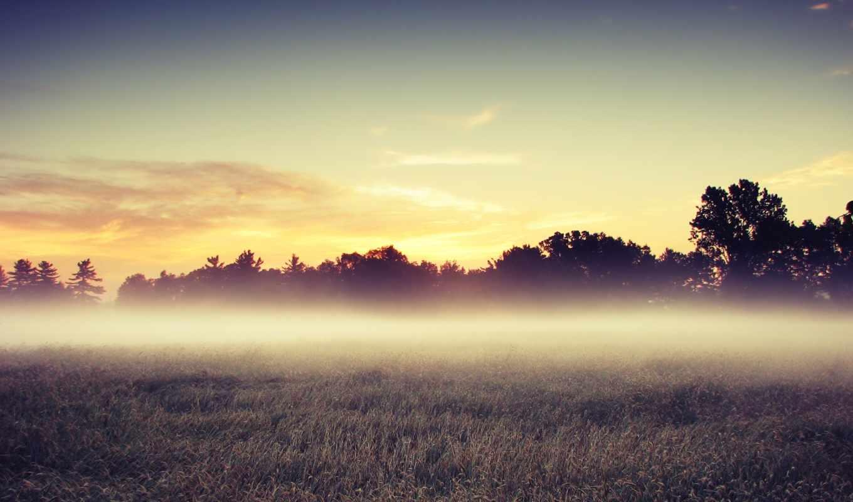 landscape, поле, trees, природа, утро, пейзажи -,