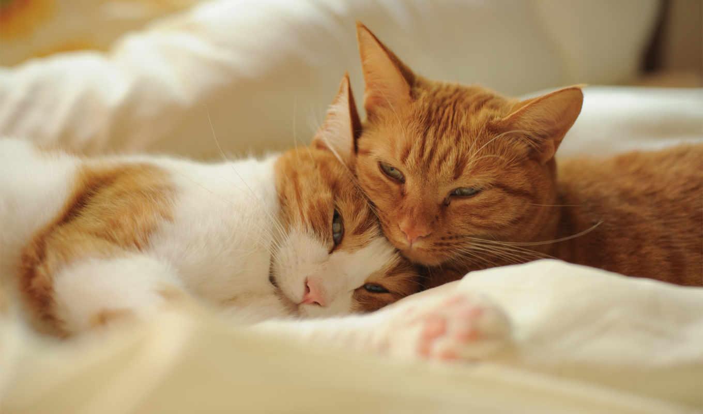 кошки, кот, pair, red, ночи, спокойной, отдых, котов, youtube,