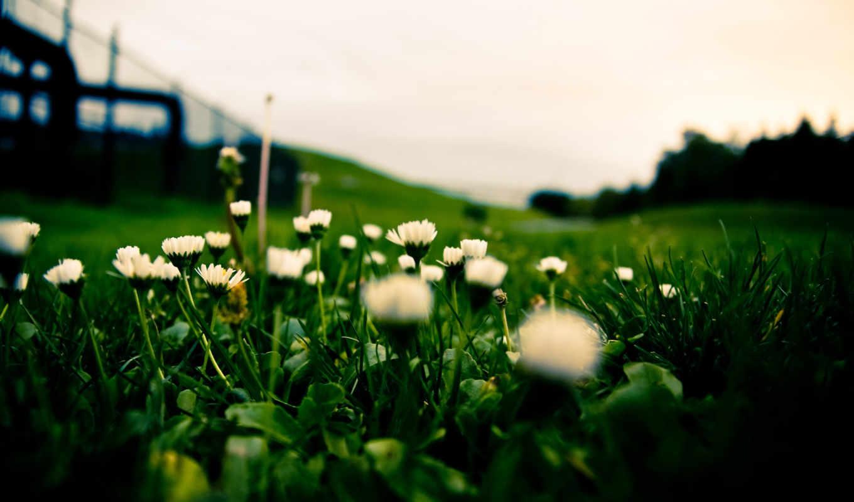 трава, макро, цветы, поле, взгляд, газон, размытость, космос,