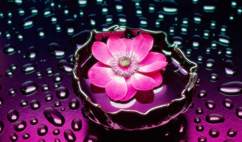 цветы, water, розовые, розовый, petals, gif,