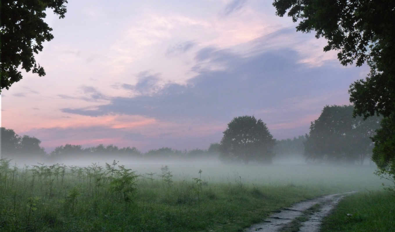 дорога, природа, лес, landscape, поле, туман, картинка,