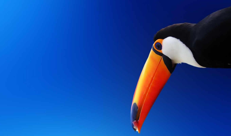colorful, сидит, птица, toucan, клюв, камни, птицы,
