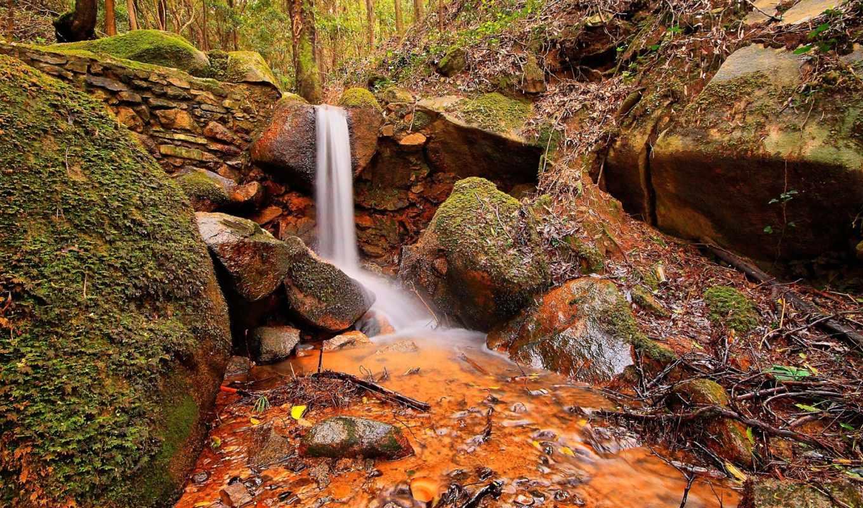 природа, лес, камни,